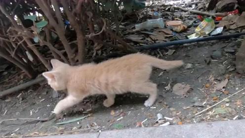 终于知道为啥有的猫离家出走就再也不回来了,原因令人意外,心疼