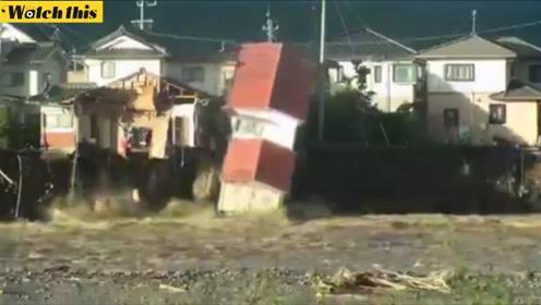 台风后的日本:洪水肆虐冲垮房屋和道路 野猪也忙着逃命