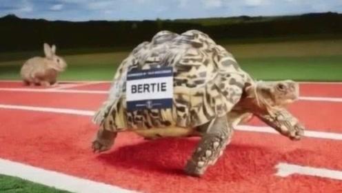 """爬行速度最快的乌龟,号称龟界""""博尔特""""!还得到了吉尼斯的认证!"""