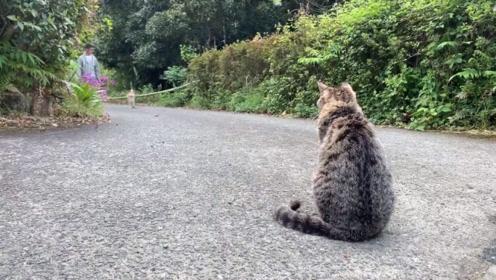 猫咪坐在路口等柴犬回家,当狗狗看到后立刻狂奔而去,太有爱了!