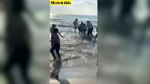 鲨鱼攻击了游泳的人们之后 被众人徒手拽上海岸