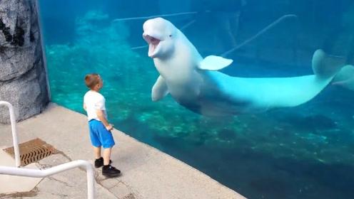 小男孩给白鲸表演翻跟斗,下一秒白鲸的反应,简直是要成精了!