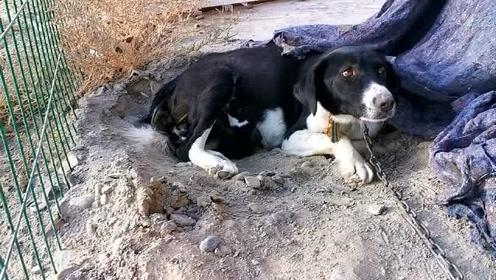 萌宠 狗不嫌家贫,乡下土狗生宝宝,主人就给铺了块布,狗子就很满足了!