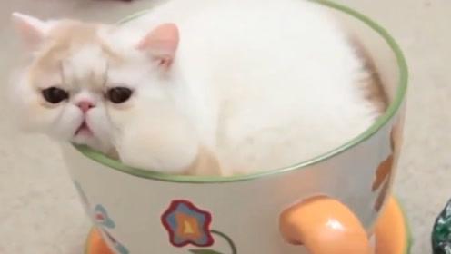 猫能进入到各种容器中,难道它真是液体?诺贝尔奖得主说出答案