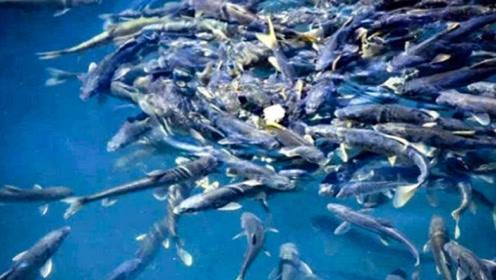 """西藏的天然""""鱼库"""",为何从来没人敢下水打捞?看完顿时恍然大悟"""