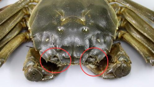 螃蟹好不好?碰一碰螃蟹的眼睛就知道,我也是这么挑选的,真简单