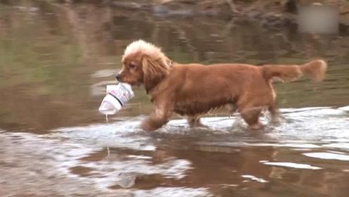 狗狗每天准时出现在河道里,清理周围的垃圾,环保部门为其嘉奖