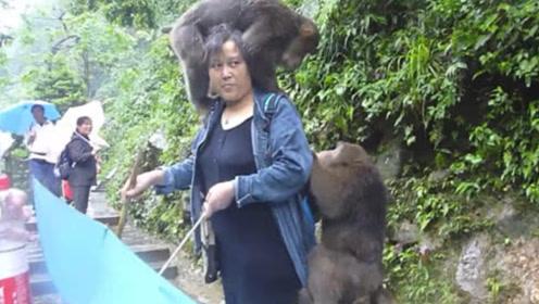 峨眉山猴子最怕的东西是什么?,生活中经常见到,猴子看到会远离!