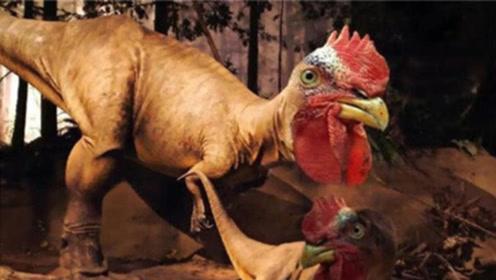 鸡的祖先是谁?美国专家已证实答案,说出来你别不相信!