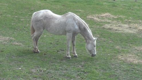 马站着打瞌睡差点摔倒,好在一招稳住,游客:躺着睡不好吗?