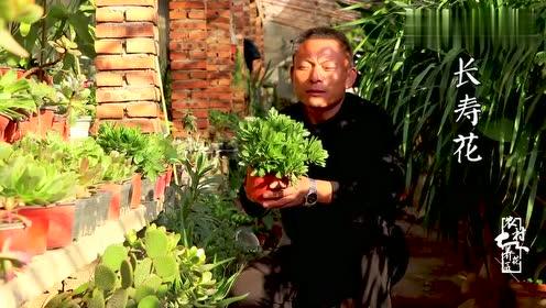 """花匠师傅放""""大招"""",教你把房间变成""""花园"""",清新又美丽!"""