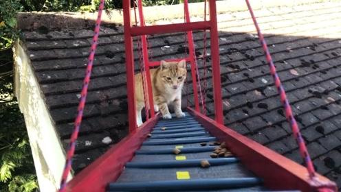 猫咪经常在屋顶上翻越,主人为了安全,给它做了一座桥