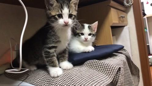 可爱小猫咪:小猫咪睡的好香啊
