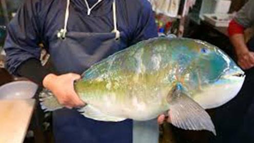 青衣鱼有多珍贵?日本顶级大厨开刀,最后被惊艳到了