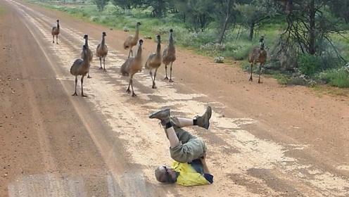 男子神奇的舞姿吸引了一群大鸟,接下来请憋住别笑,镜头记录过程