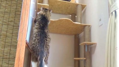 怕猫上不去睡觉的地点,特意做了个梯子,真是为主子操碎了心