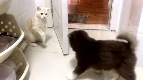 阿拉斯加:狗子报仇,十年不晚