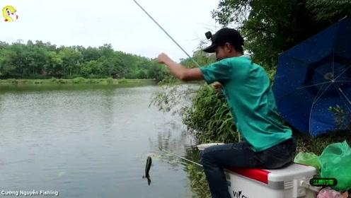 鱼塘边小伙撒下钓竿,一会钓竿拉动小伙一拉钓就收获大罗非