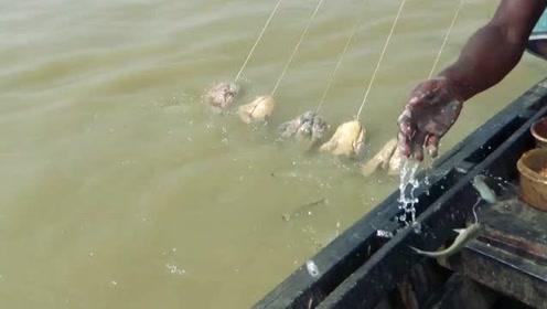 这是我见过最牛的钓鱼方法,什么都不需要,徒手就能行