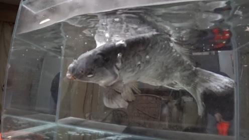 液氮的速冻能力有多强?老外用鱼做实验,看完令人后怕