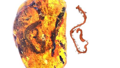 缅甸发现9900万年前的新物种,藏在琥珀中的东西太吓人!