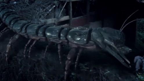 女友突然消失,最终迹象表明竟是被蜈蚣拖走了?