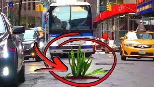 国外司机的素质有多高?路中间放一盆花就知道了!
