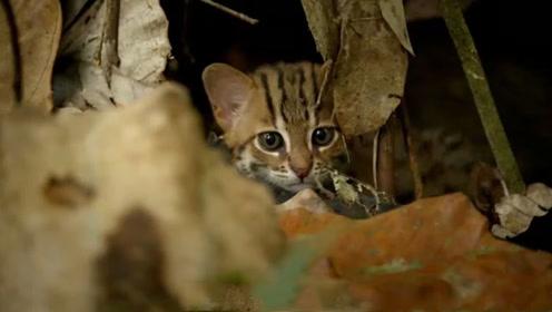 最小的猫咪你见过?喜欢居住在田螺里,网友:想买一个!