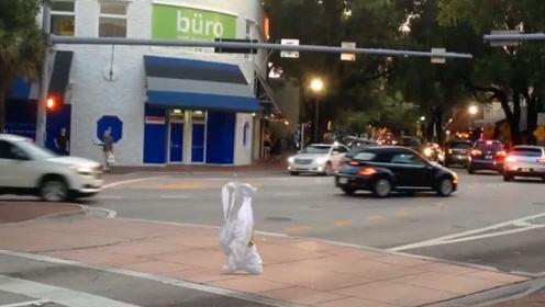 """白色生物在马路上""""行走"""",走出了二百五的气场,真是开眼了"""