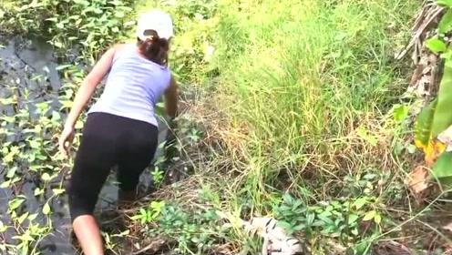 柬埔寨美女用田螺做诱饵捉黄鳝,一会就捉了半桶,实在太聪明了!
