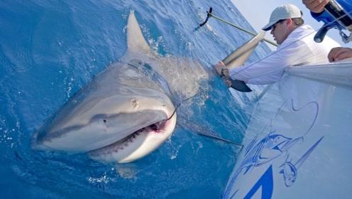 老外意外钓到一条巨大的鲨鱼,竟体长2米重达300斤,看完佩服不已!