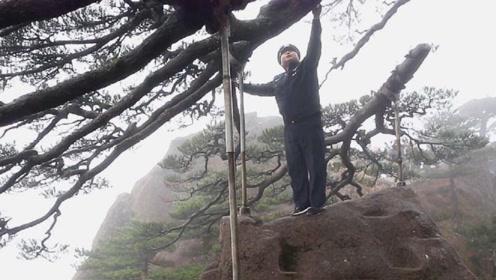 中国为一棵树买1亿保险!24小时武警贴身看守,一片叶子值20万