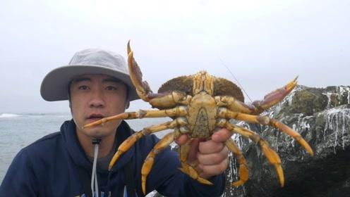 小伙海边用鸡腿钓螃蟹,一杆子就钓上来两个,这种生活太羡慕了