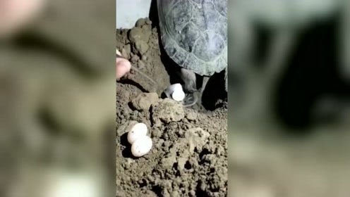 """乌龟:难道我刚才是放了一连串的""""屁""""吗"""