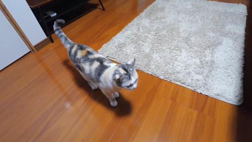 可爱小动物:小花猫玩捉迷藏