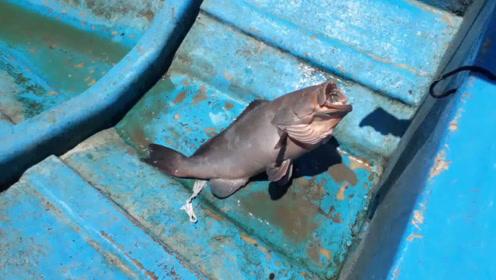 鱼竿都不用,一分钟就能钓一条大鱼,这种钓鱼方法真厉害