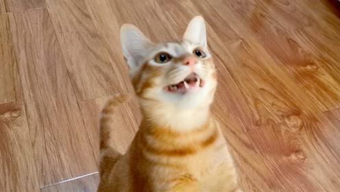 吸吸:橘猫讨猫粮的样子好像只狗啊,这么可爱还被欺负,好可怜