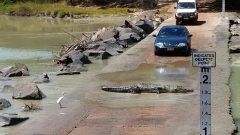 鳄鱼拦路收费?车主纷纷有苦难言,镜头记录全过程