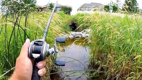 为什么挖个鱼塘能挖出来很多鱼,鱼都是从哪来的?这下看明白了吗?