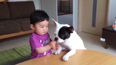 狗狗和小主人争东西吃,宝宝刚一哭,狗狗也跟着模仿起来