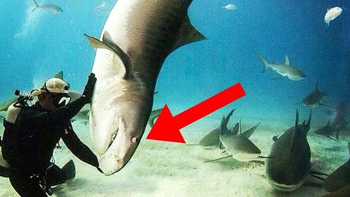 4个关于鲨鱼的疯狂事实
