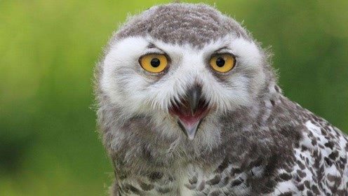 在农村三更半夜的时候,为什么最怕猫头鹰笑?还真不是迷信