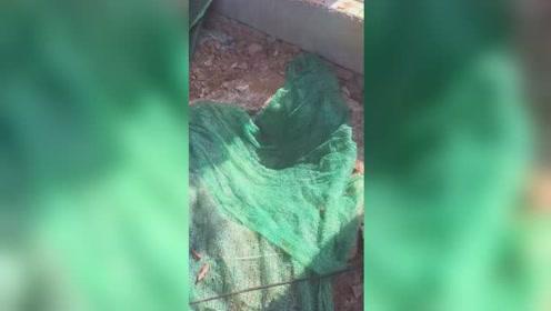 9岁男孩行走时掉入下水道不幸身亡 事发前井上仅铺绿网