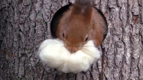 """小松鼠趁着天气好,居然把""""被子""""拿出来晒,镜头拍下搞笑一幕"""