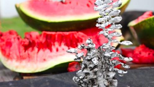 将融化后的铝水倒进西瓜中,切开西瓜,老外惊喜的得到一件艺术品