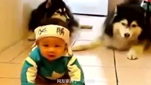 狗狗教小宝宝爬,教的真是格外认真,像个小老师一样