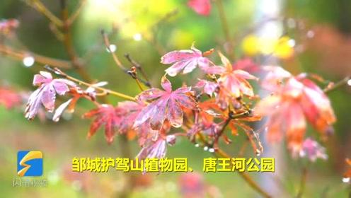 醉美初冬丨57秒带您领略邹城护驾山植物园、唐王河公园初冬美景