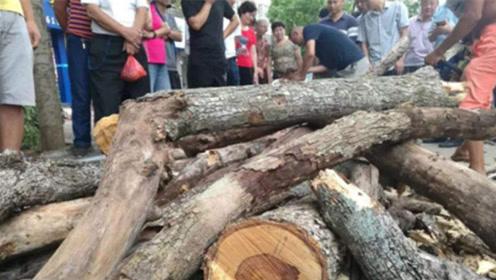 """我国农村最值钱的""""树""""!曾被当柴火烧,如今1公斤炒到好几千元"""