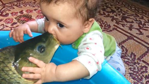 宝宝亲了一口家里的大鱼,接下来的画面,让人哭笑不得