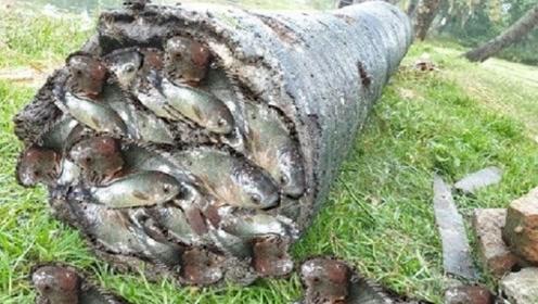 男子将河里的棕榈树根捞起来,将树洞中的东西掏出,发现都值得了